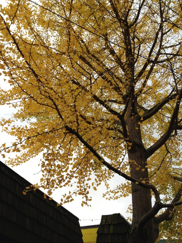 Stunning bright tones of the last leaves shedding off this tree.