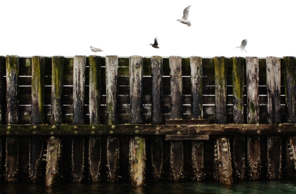Seagull Flight by Alex Mendez.